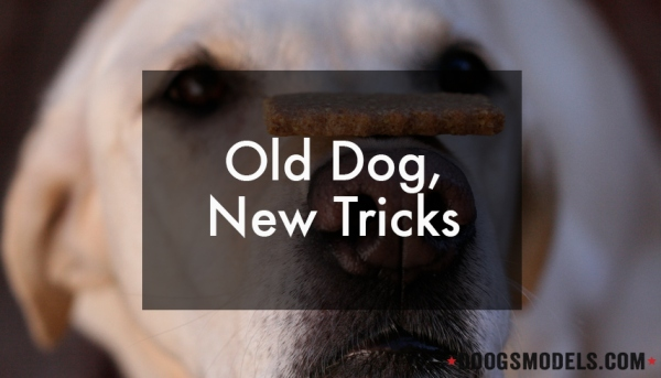 OldDogNewTricks